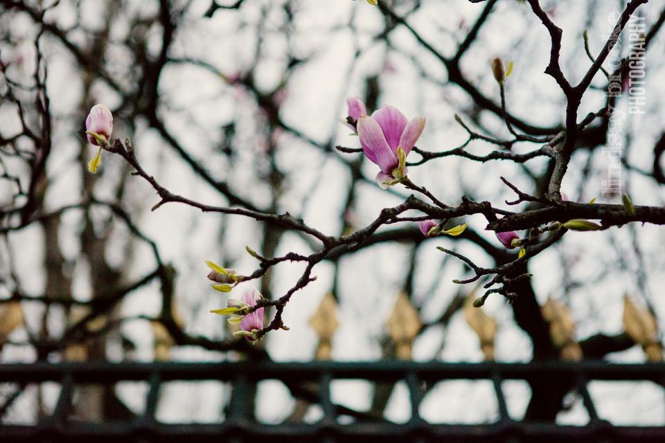 2016-03-Paris-Blog-94